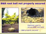 b b root ball not properly secured
