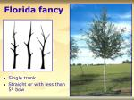 florida fancy11