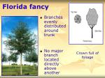 florida fancy34