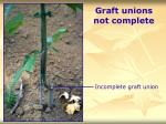 graft unions not complete