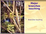 major branches touching