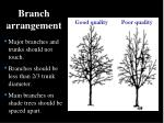 branch arrangement