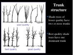 trunk structure