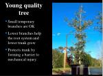 young quality tree