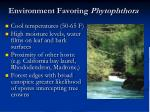 environment favoring phytophthora