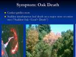 symptom oak death