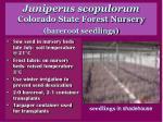 juniperus scopulorum colorado state forest nursery bareroot seedlings
