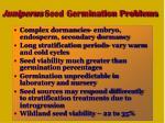 juniperus seed germination problems