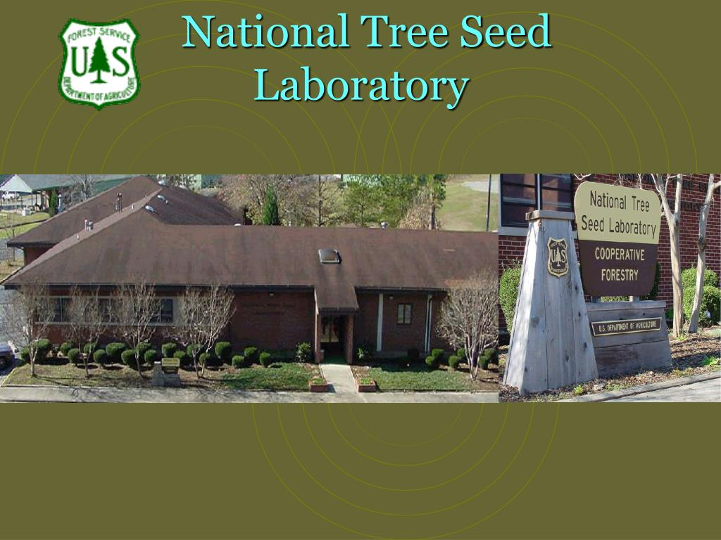 national tree seed laboratory l.