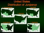 united states distribution of juniperus