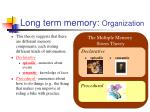 long term memory organization