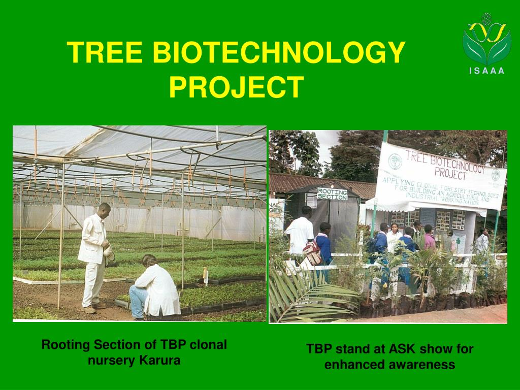 tree biotechnology project l.