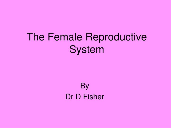 the female reproductive system n.