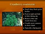 cranberry rootworm