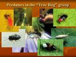 predators in the true bug group