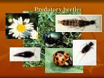 predatory beetles