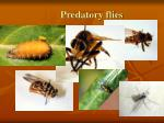 predatory flies
