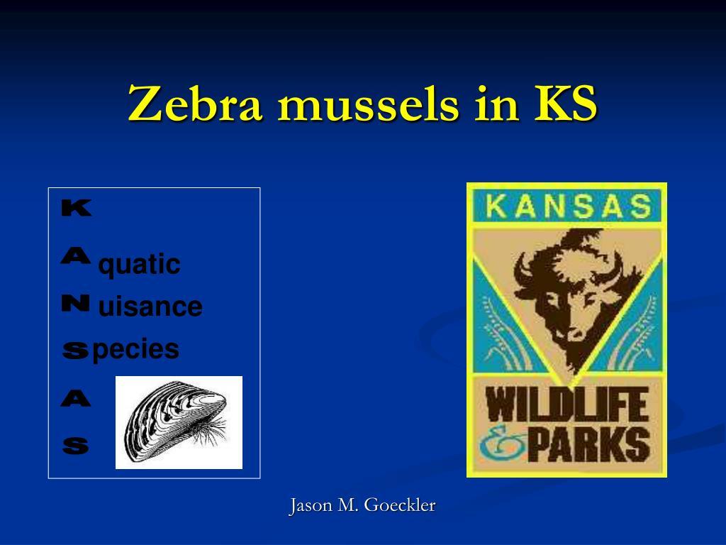 zebra mussels in ks l.