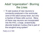 adult organization blurring the lines