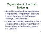 organization in the brain birdsong