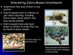 interesting zebra mussel attachments