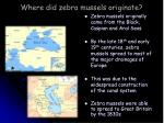 where did zebra mussels originate