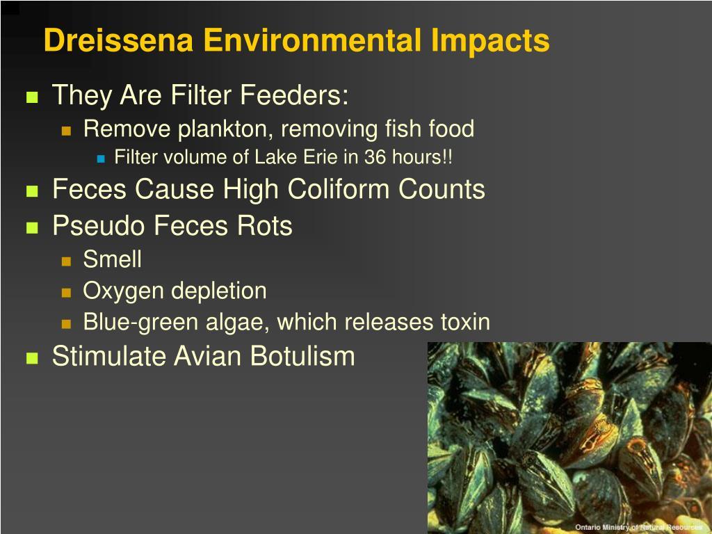 Dreissena Environmental Impacts