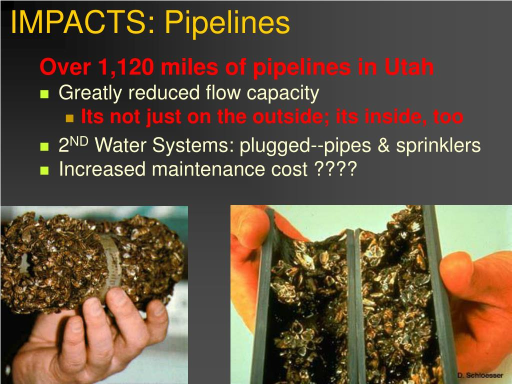 IMPACTS: Pipelines