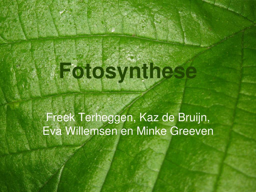 Wonderlijk PPT - Fotosynthese PowerPoint Presentation, free download - ID:438670 GY-12