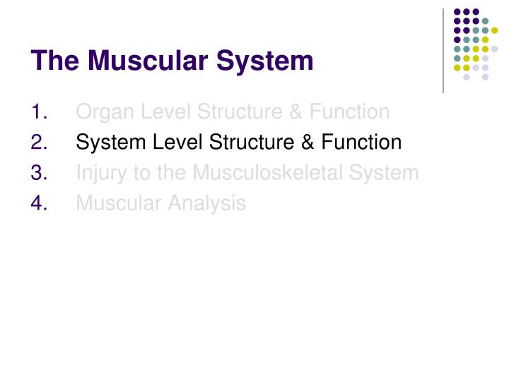 PPT - The Muscular System PowerPoint Presentation - ID:438893