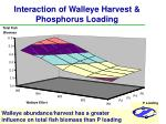 interaction of walleye harvest phosphorus loading16
