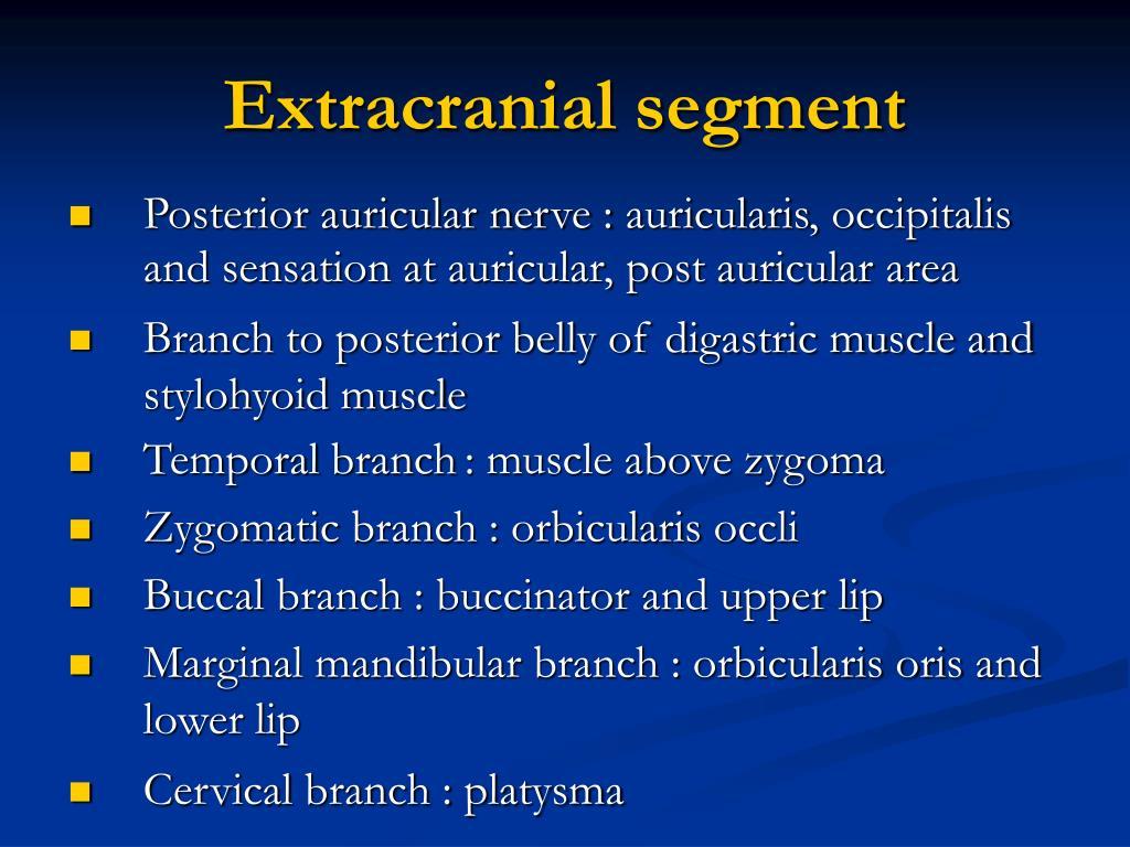 Extracranial segment