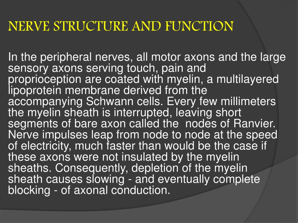 NERVE STRUCTURE AND FUNCTION