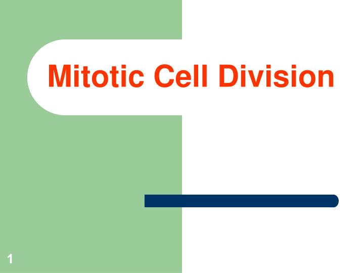 mitotic cell division n.