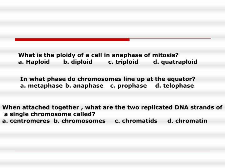 Ppt cell division mitosis and meiosis powerpoint presentation what is the ploidy of a cell in anaphase of mitosis ccuart Images