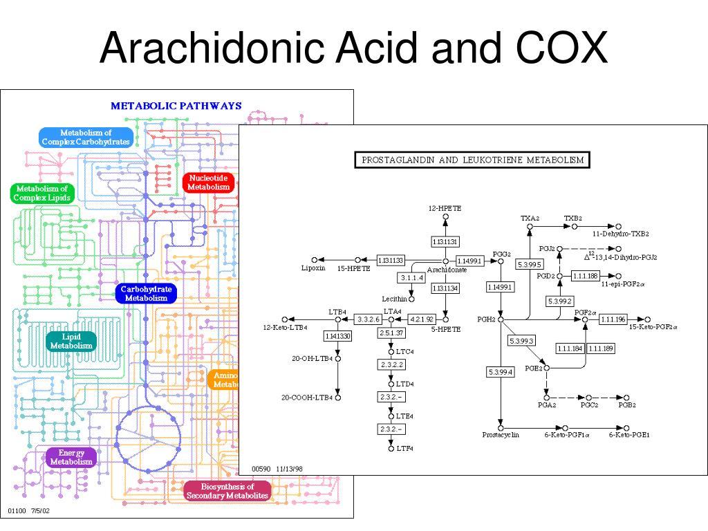 Arachidonic Acid and COX