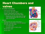 heart chambers and valves