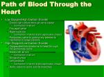 path of blood through the heart
