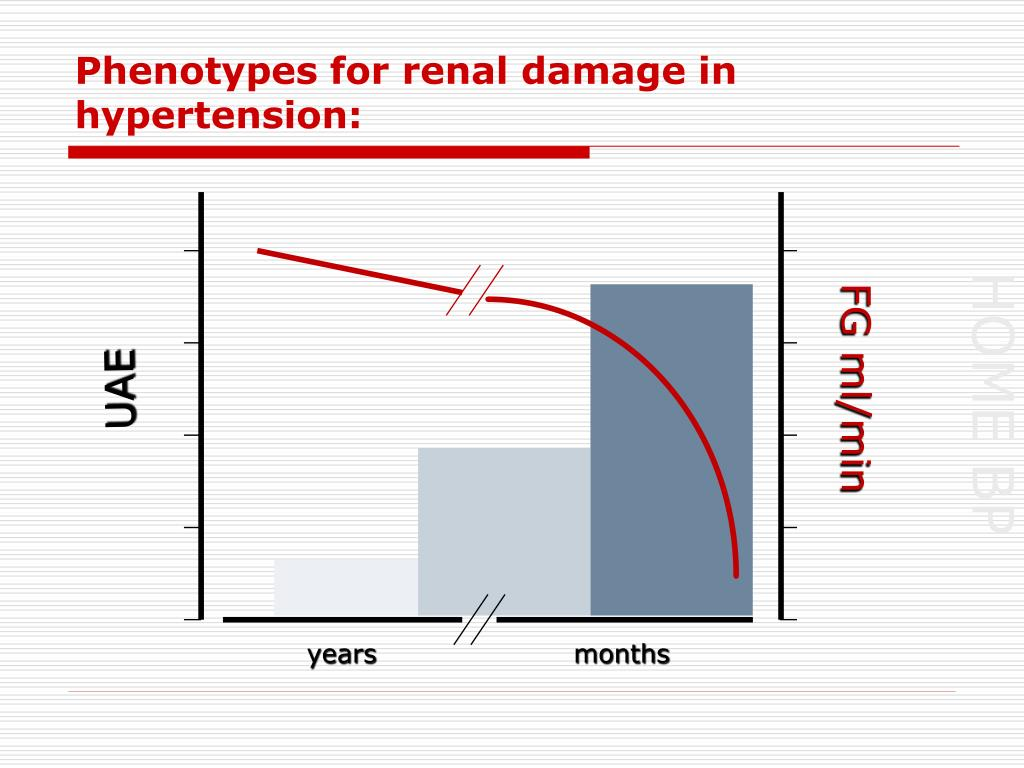 Phenotypes for renal damage in hypertension: