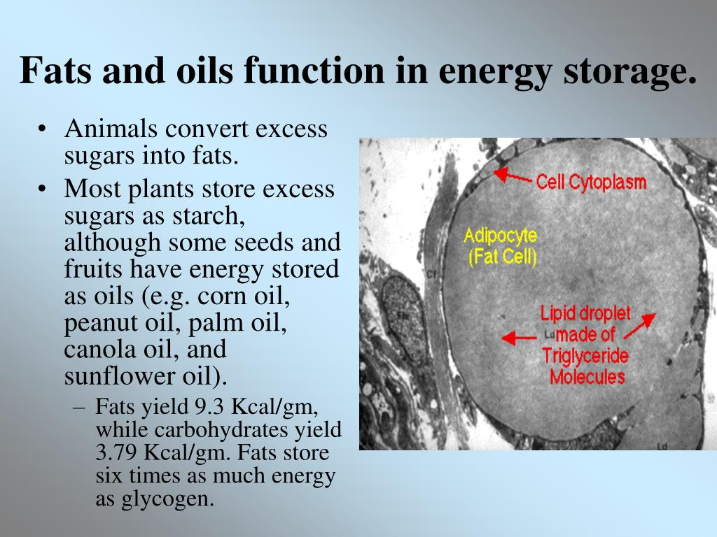 Fats and oils function in energy storage.