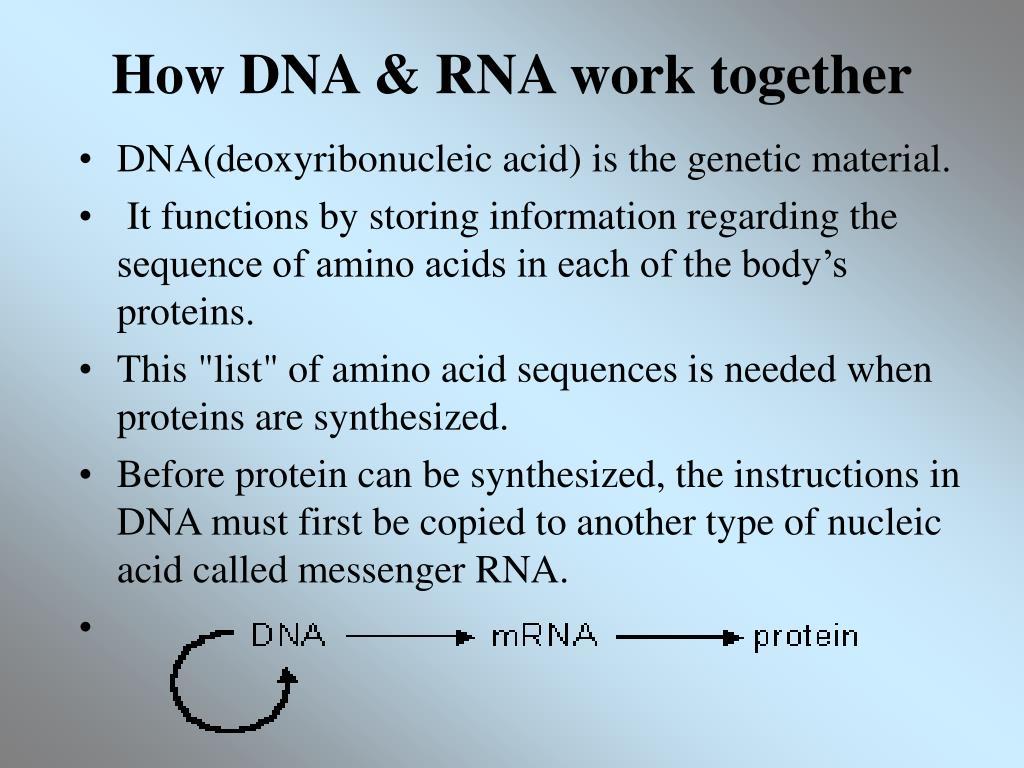 How DNA & RNA work together