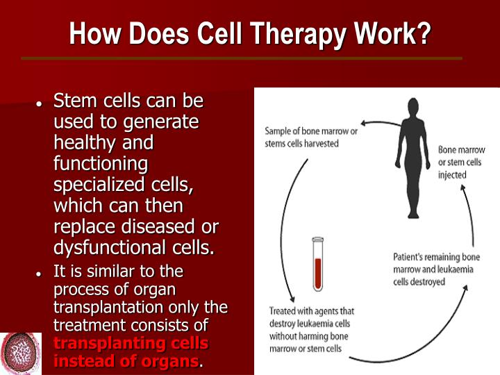 How Does Cell Therapy Work?