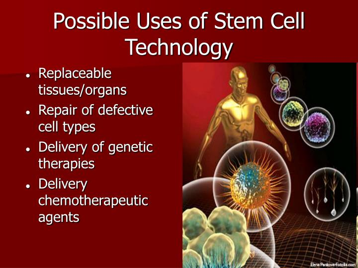 Possible Uses of Stem Cell Technology