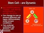 stem cell are dynamic