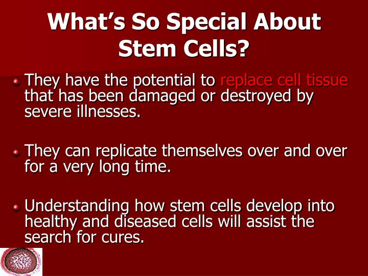 What's So Special About Stem Cells?