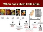 when does stem cells arise