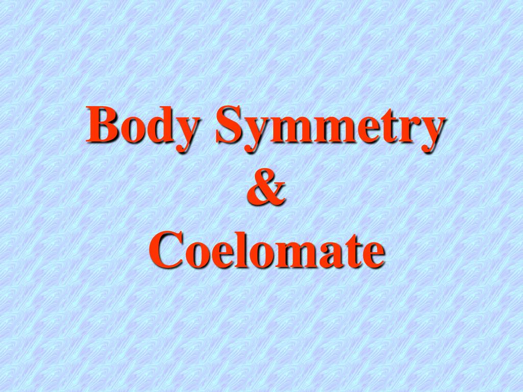 body symmetry coelomate l.