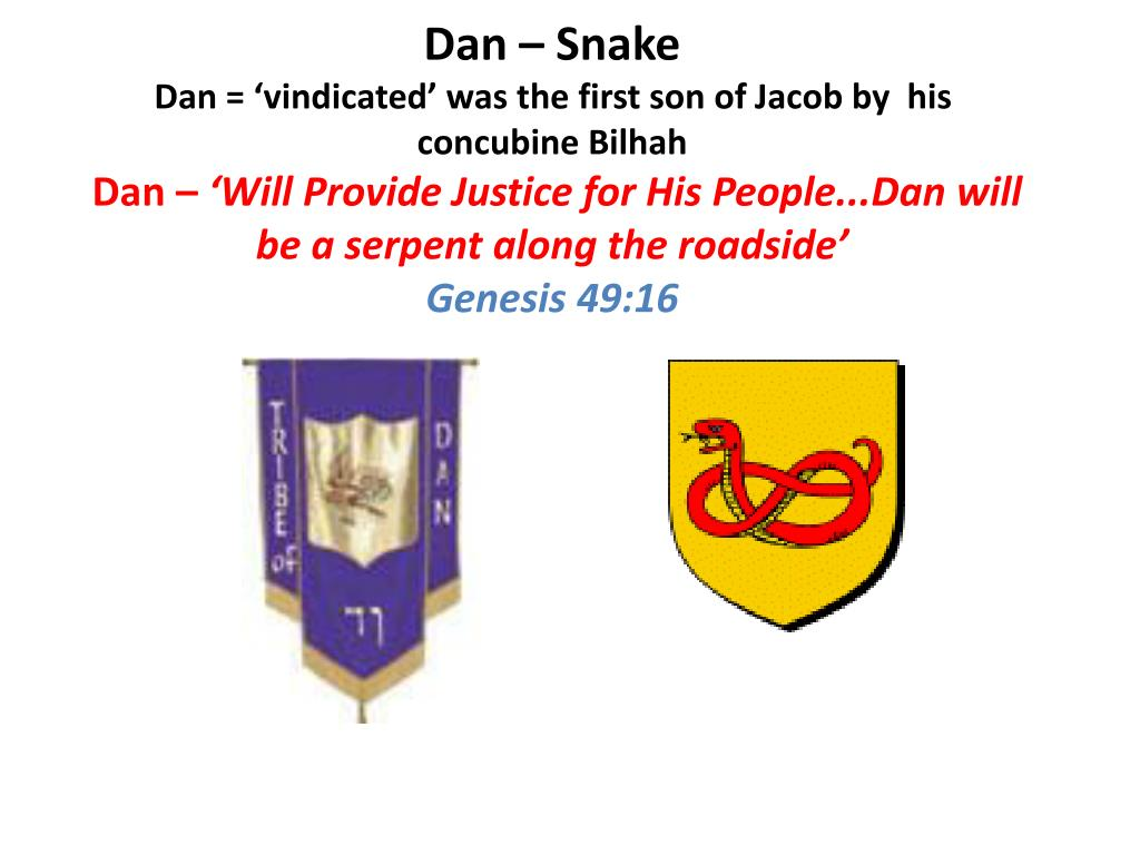 Dan – Snake