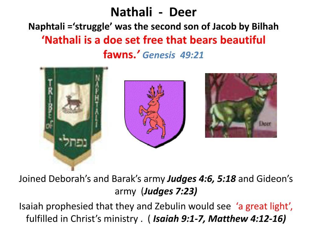 Nathali  -  Deer