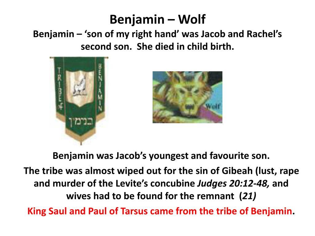 Benjamin – Wolf